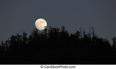 Full moon rise over a forest