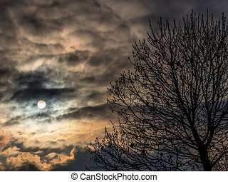 sun behind clouds and tree - the sun is behind clouds and a...