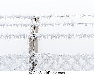 hoarfrost in winter - in the cold in winter, frost forms