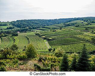 weingarten a winemaker - the vineyard of a winemaker in...