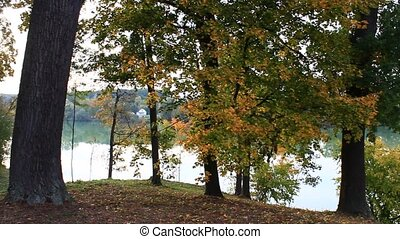 beautiful lake in the forest in autumn