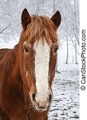Horse in winter with snow covered trees