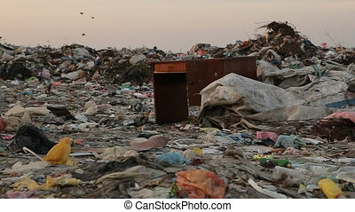 Landfill and birds at sunset