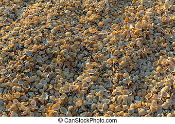 Shell beaches on the Sea of Azov. Karalar regional landscape...
