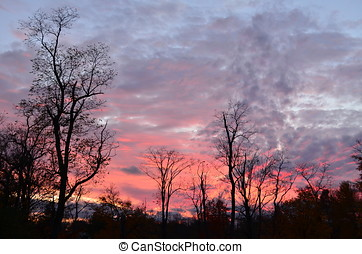 Cloudy pink and purple sky at sunset with bare trees in foreground
