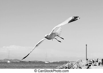 flying seagulls on Formentera port summer balearic islands
