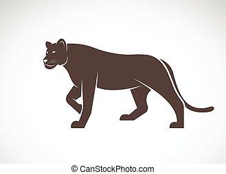 animais, fundo, Leão, vetorial, femininas, selvagem, branca