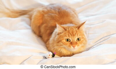 Cute ginger cat lying in bed. Fluffy pet playing with toy...