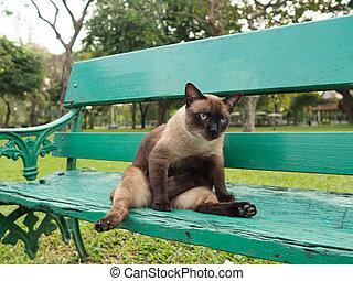 Cute fat roan cat lying on green chair in park.
