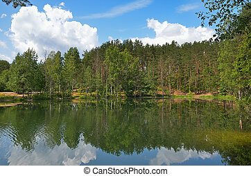 Pines on lake