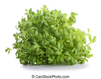 Watercress (Lepidium sativum) - cress bunch isolated on...