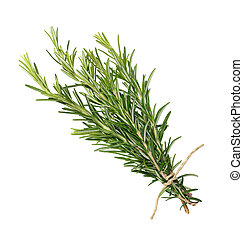fresh rosemary bunch - rosemary bunch tied isolated on white...
