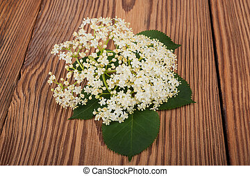 Elder (Sambucus nigra) - Elder flowers on a wood background