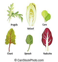 Collection of different plants arugula, witloof, corn,...