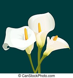 Bouquet of white calla lilies on dark green background....