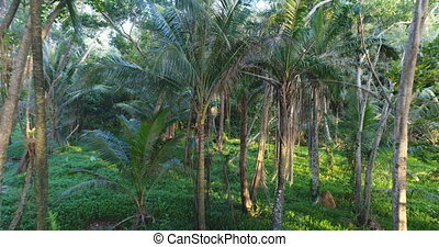 Fly through in the jungle - Fly through tropical palm trees...