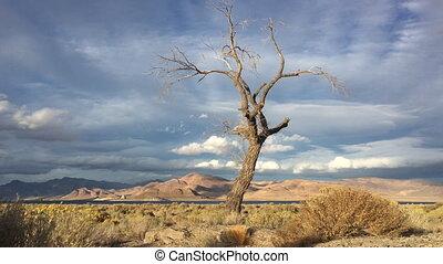 Lone Tree at Sunset Pyramid Lake Nevada