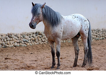 Gray horse - Standing horse against a gray wall