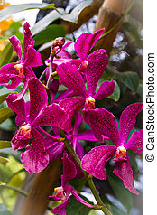 Beautiful pink orchid on the garden with bokhe background