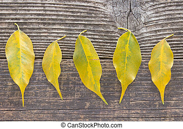 Yellow autumn leaves on wooden background
