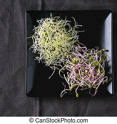 Plate of Fresh Sprouts - Healthy diet. Fresh Garlic and...