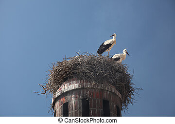 Storks in nest at top a an old chimney in Faro, Portugal
