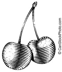 Engraved isolated illustration of a cherry - Engraved...