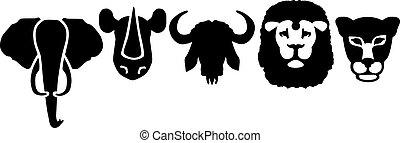 Elephant rhino buffalo lion leopard heads