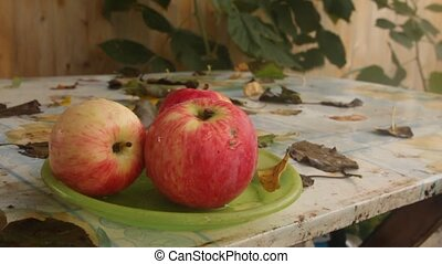 apples on a plate - forgotten apples on a plate on the table...