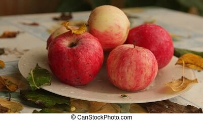 apples on a plate with green grass bedbug crawling under the...