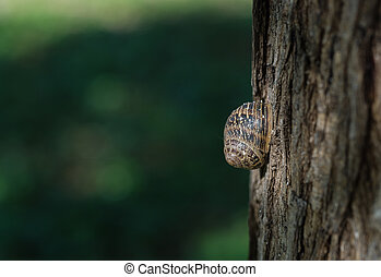 roman snail helix pomatia on dry trunk - Profile of a dry...