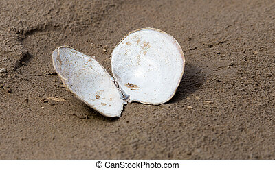 shell in the sand on the lake