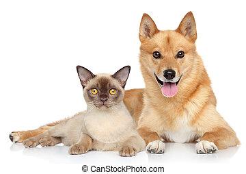 lycklig, hund, tillsammans, katt