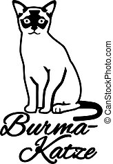 Burmese cat with german name