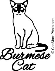 Burmese cat with breed name