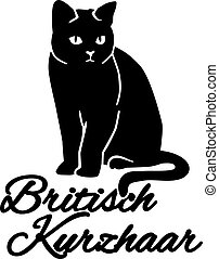British Shorthair with german name