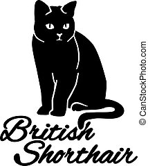 British Shorthair cat with breed name