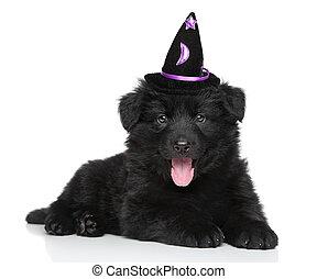German shepherd puppy in wizard hat on white background -...