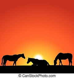 Horses at Sunset - Horses at sunset