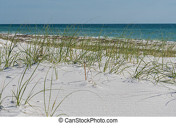 Sea Oats with Blue Gulf Waters and soft white sand