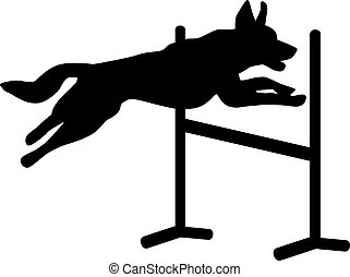 Dog agility jumping over hurdle