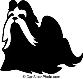 Shih Tzu with long hair