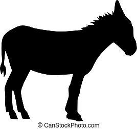 Donkey on white background