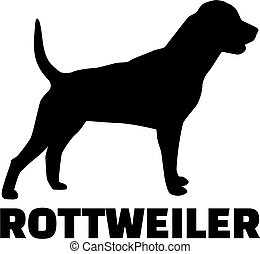 Rottweiler with breed name