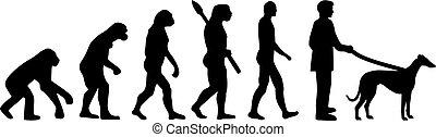 Greyhound evolution