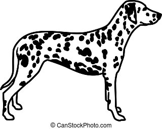 Dalmatian with spotted coat