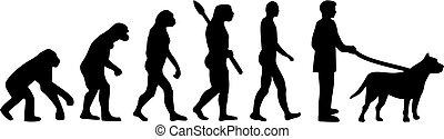 Pit bull evolution