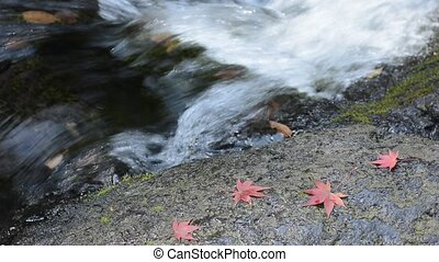 Red maple leaves - Autumn red maple leaves on a brook side...