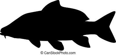 Carp silhouette