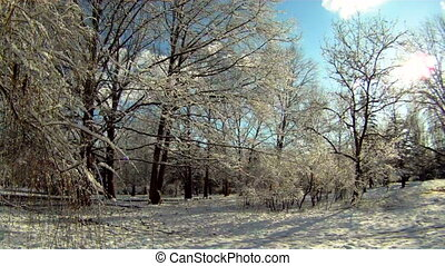 Forest covered with snow - Beautiful snow-covered forest....
